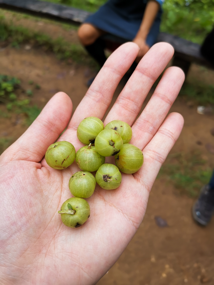 Indian Gooseberry: Amla